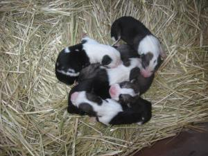 Meet the storm litter on their second day of life.