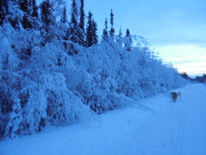 The warm temps and a little freezing rain over Christmas have made the trees heavy.