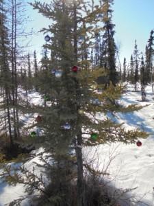 A Christmas tree!!