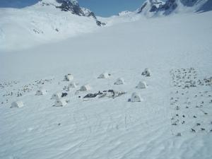 Setting up dog camp on an Alaskan glacier.